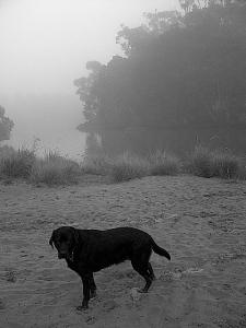 Ruby in the fog