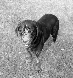 Muddy puddled