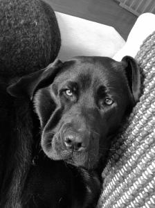 So full I can't move off the sofa