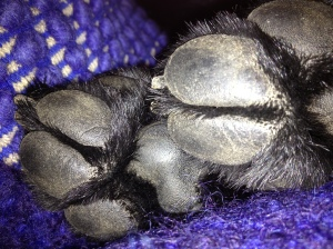 My front paw pads