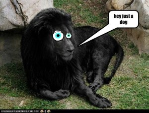 Obviously dog masquerading as lion